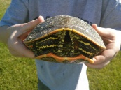 My oldest son holding the turtle.
