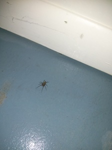 Here's a picture I took of one of the spiders who crept out while I was cleaning. Disgusting!