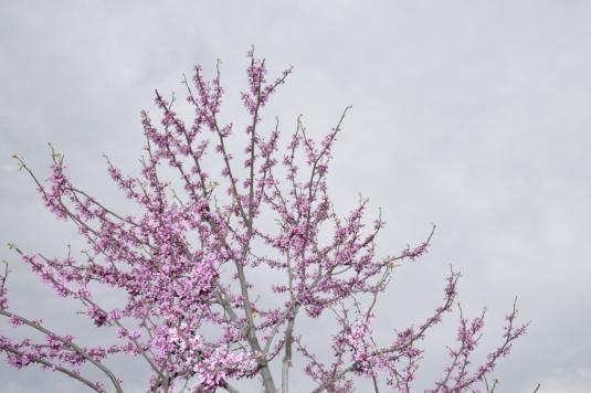luca's tree 1